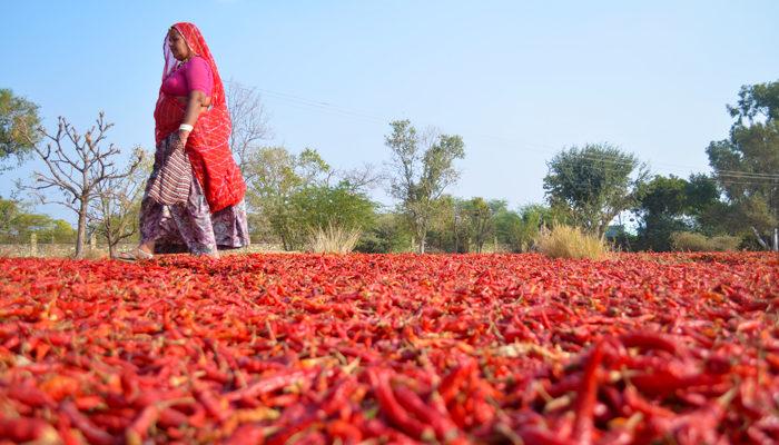 Pali – A Peaceful Jewel Of Rajasthan