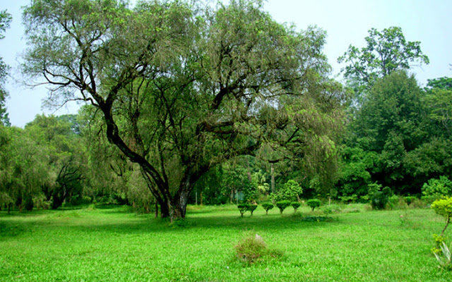 Dehradun – Is Green Turning Into Gray?