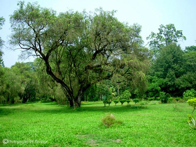Dehradun – Is Green Turning Into Gray?