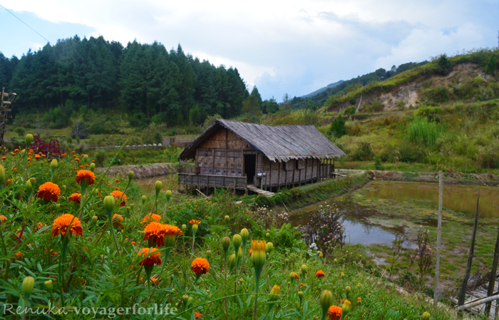 Where To Stay In Ziro Valley?