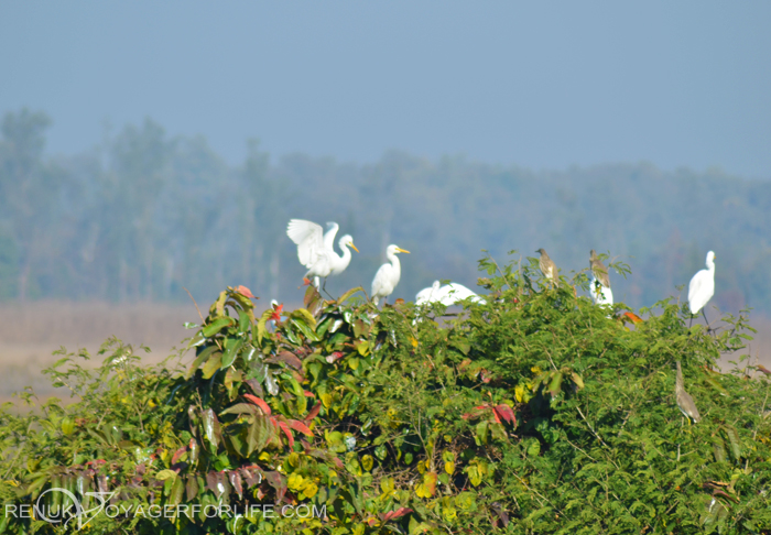 Birds in forests of India