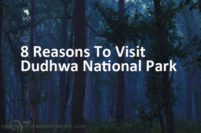 Dense forests of India Dudhwa National Park