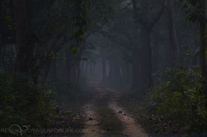 Forests of Uttar Pradesh