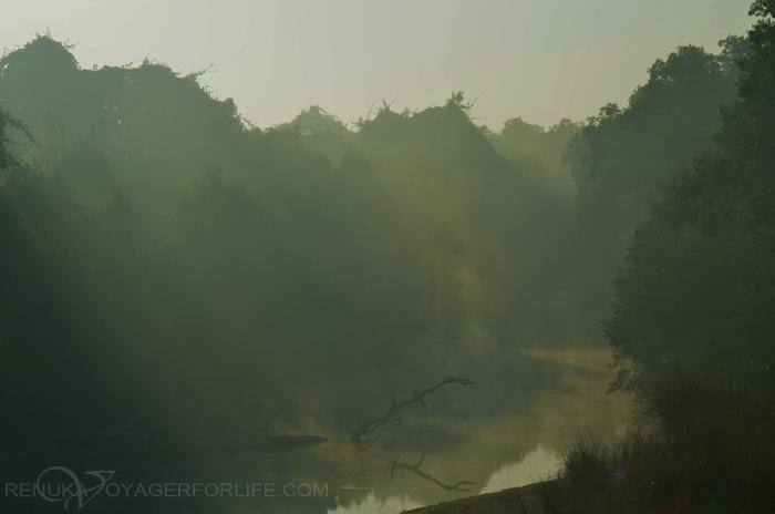 Landscapes of Dudhwa National Park