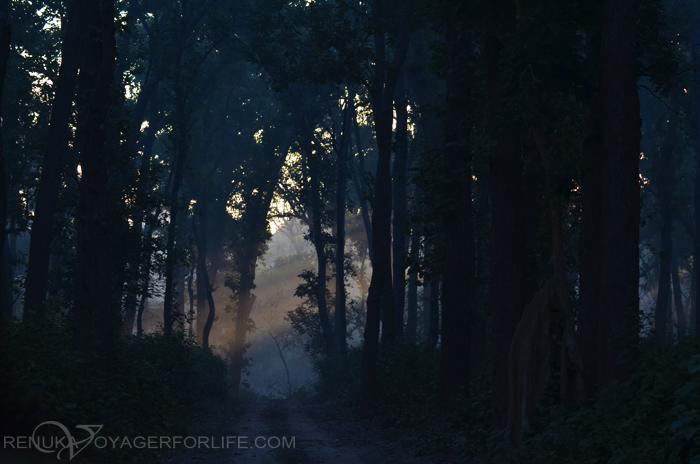 Jungles of Uttar Pradesh