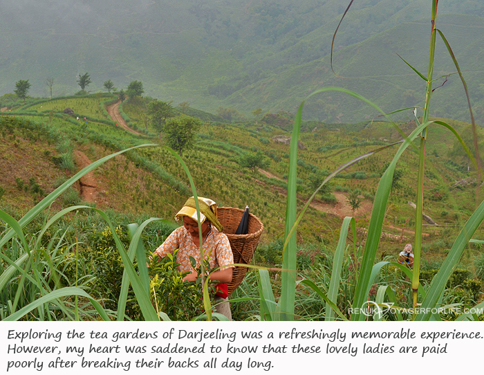Photos of Darjeeling tea gardens