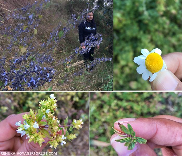 IMG-Herbs in Binsar Uttarakhand