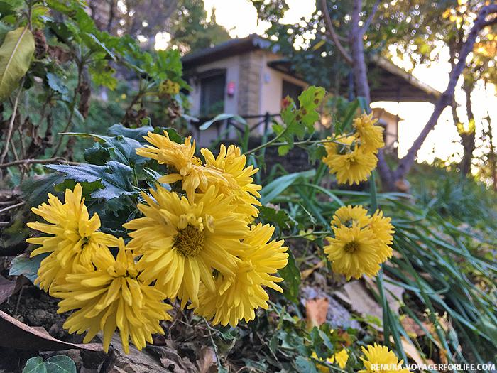 IMG-Nature retreats in Kumaon